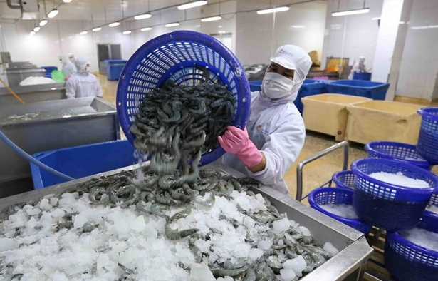 US removes anti-dumping duty on Minh Phu frozen shrimp