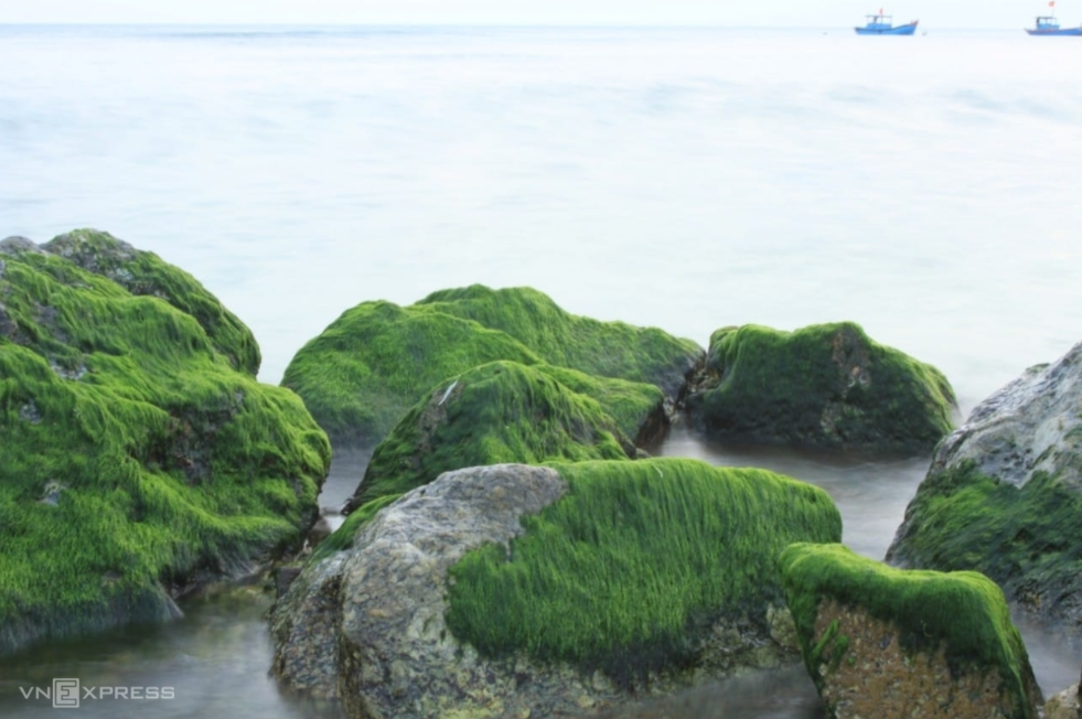 moss season in ly son island