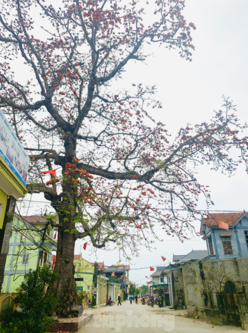 150 year-old silk-cotton tree in Nghe An recognized as Vietnam Heritage Tree