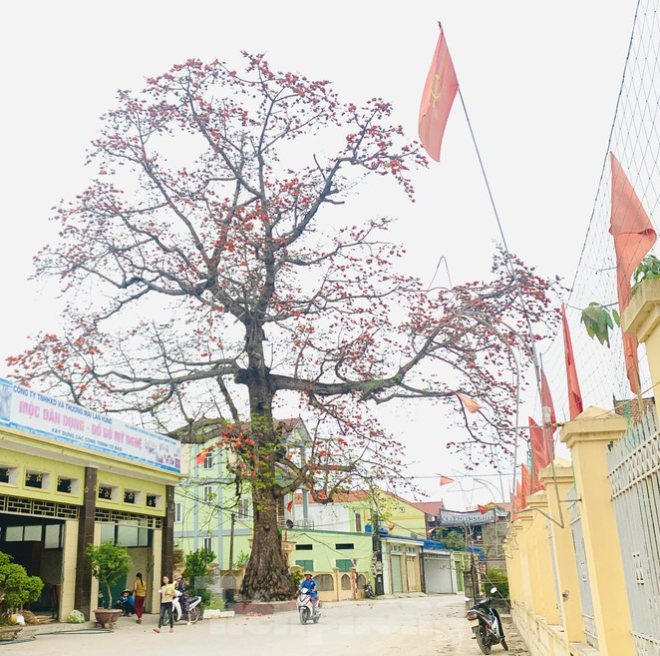 150-year-old silk-cotton tree in Nghe An recognized as Vietnam Heritage Tree