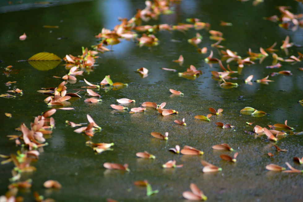 Tranquil Sai Gon in resin seed season
