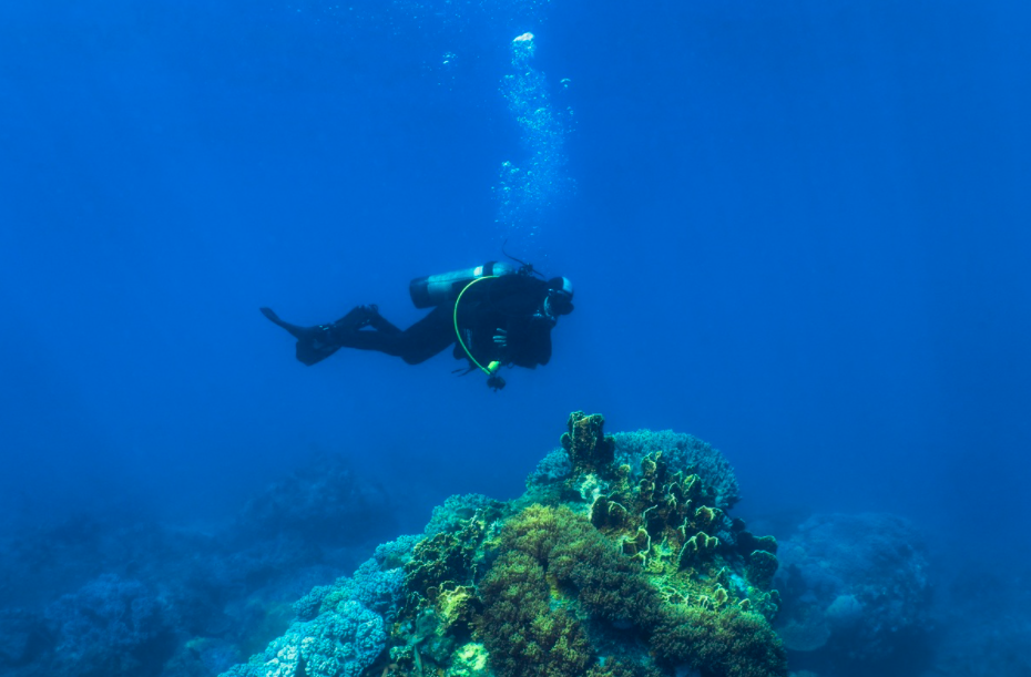 Explore the seabed of Hon Mun island