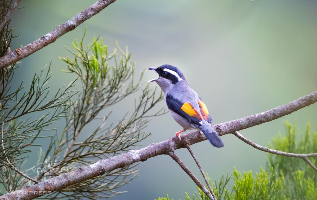 Amazing birds on Bach Ma Mount