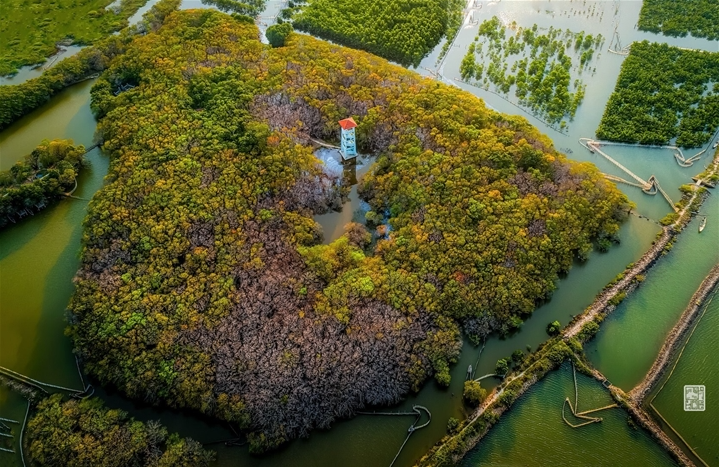 Getting lost in Hue's beautiful Ru Cha forest