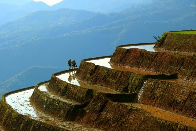 mu cang chai terraced fields glitters in irrigation season not to miss tourism destinations