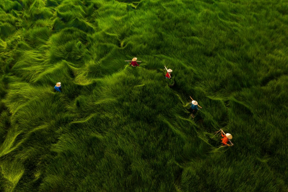 Vietnam Receives Two Honorable Mentions At International Photo Contest