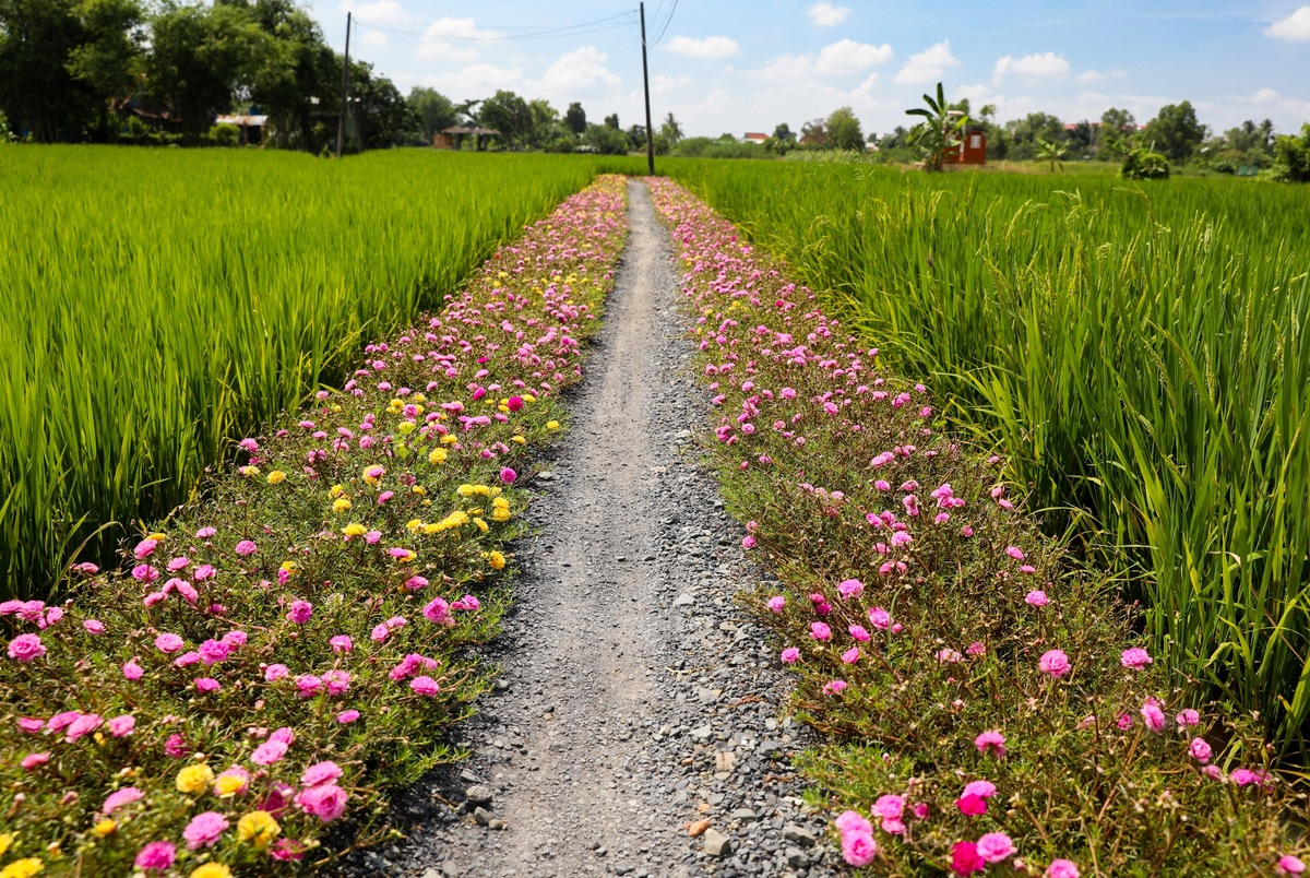 breathtaking sight of moss rose flower road in the outskirts saigon