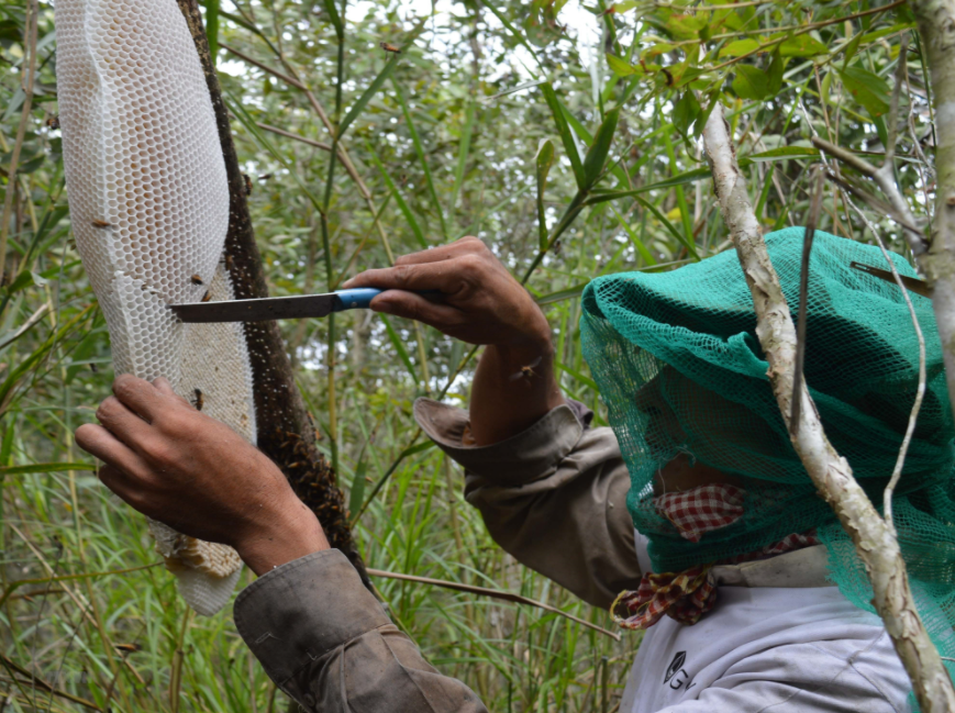 Hunt For Natural Forest Honey in Vietnam's South Pole