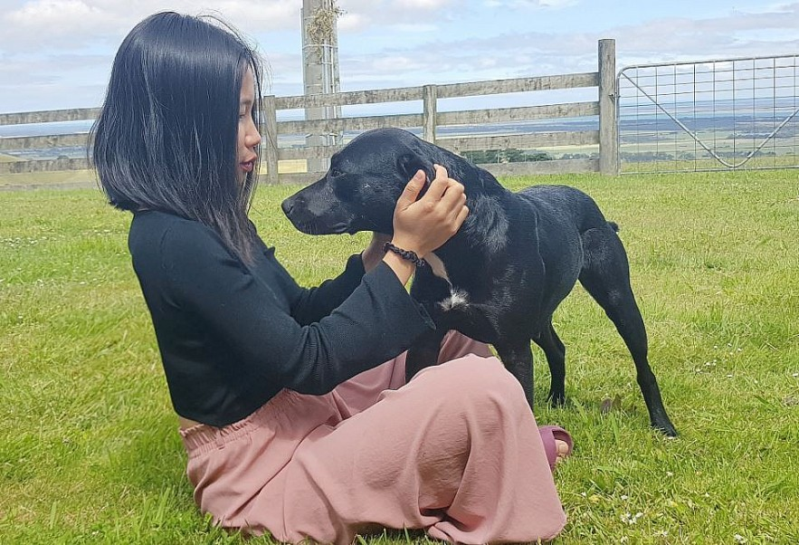 Vietnamese Wife Rescues Old Pets in Australia
