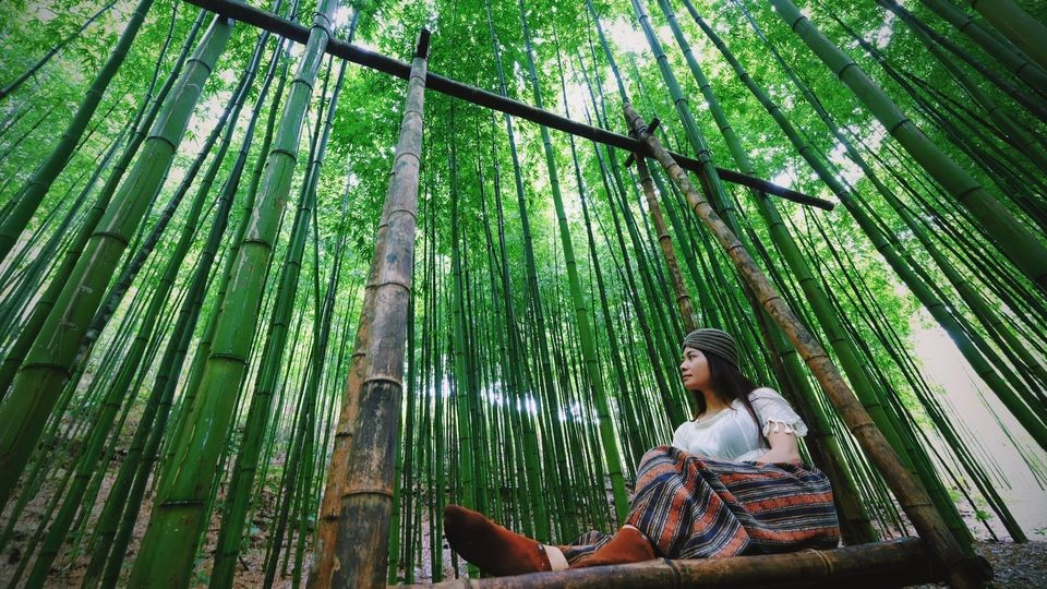 Photo: 60-year-old Green Bamboo Forest in Mu Cang Chai