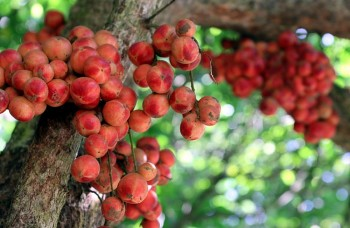 Enjoying Sweet Fruits from the