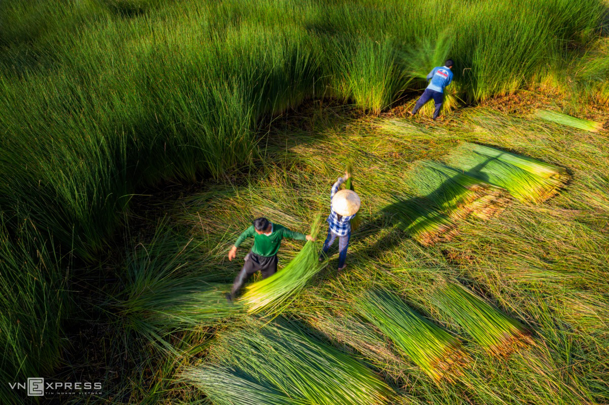 grass harvest seasons in the west side of vietnam