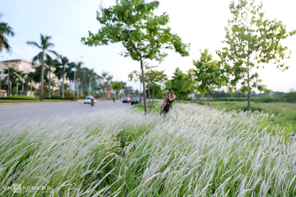reed field in ha tinh new trending check in site in vietnam