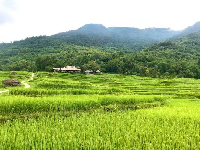 immersed in pu luongs evergreen paddy fields
