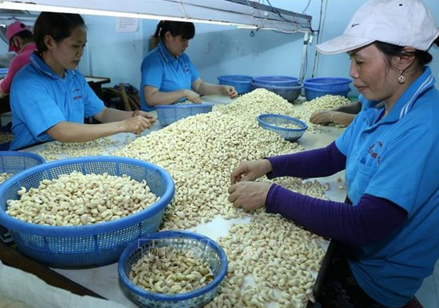vietnam us explore ways to raise export and import turnover of farm produce