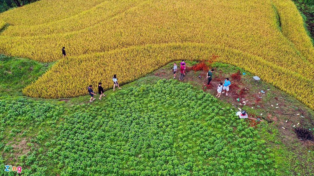mu cang chais splendid scene in the harvest season