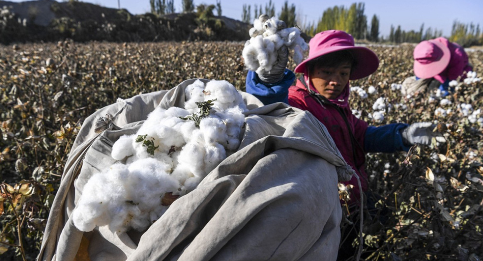 us blocks its export of cotton from xinjiang will vietnam be affected