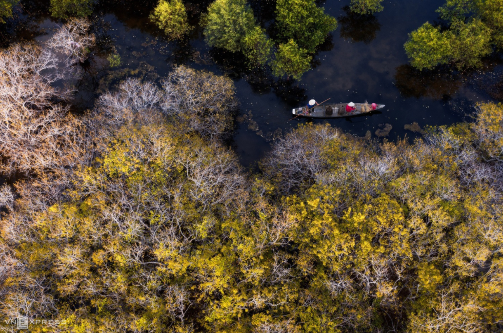 ru cha mangrove forest in the changing moments of seasons