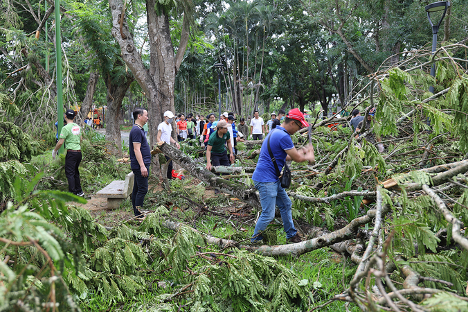 noul storm caused more than usd 21 million in damage 10000 trees fallen in hue