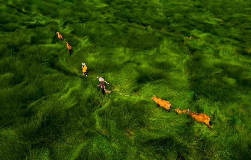 vietnam photographers works exhibited in drone photo awards 2020
