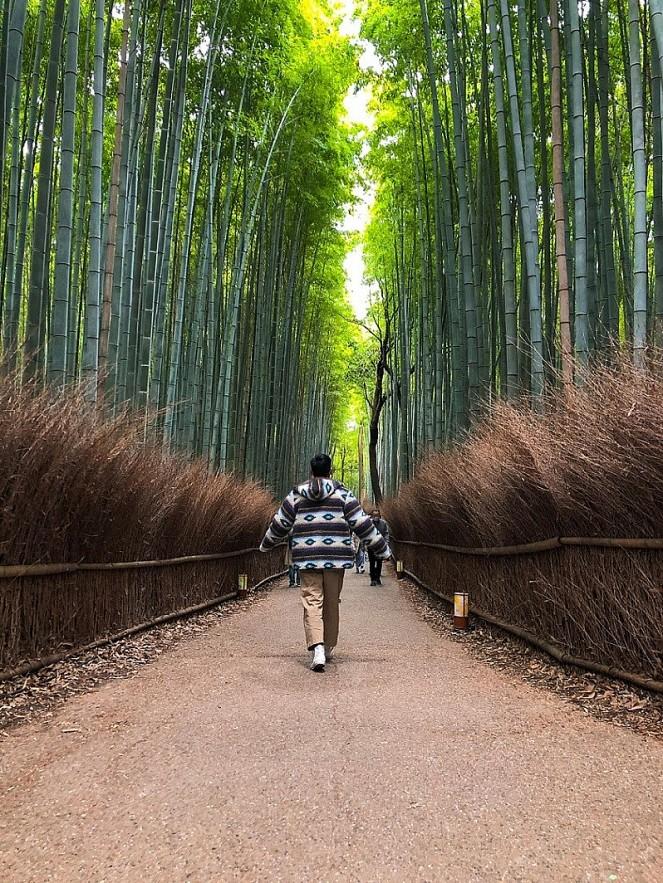 Autumn in Japan Through a Vietnamese Lens