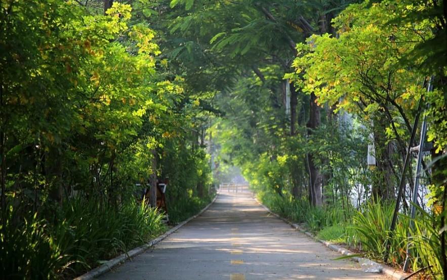Restful Streets of Hanoi in Autumn