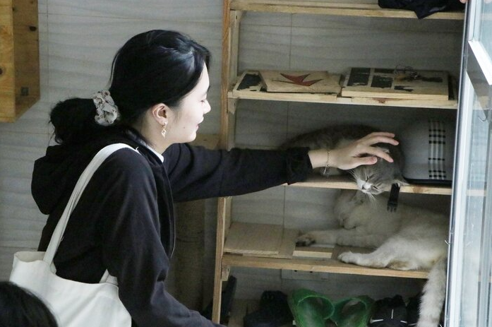 afp praised 24 year old vietnamese who quited his stable job to save abandoned cats