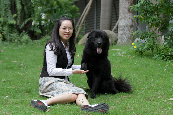 vietnamese dog that looks like a tibetan clam