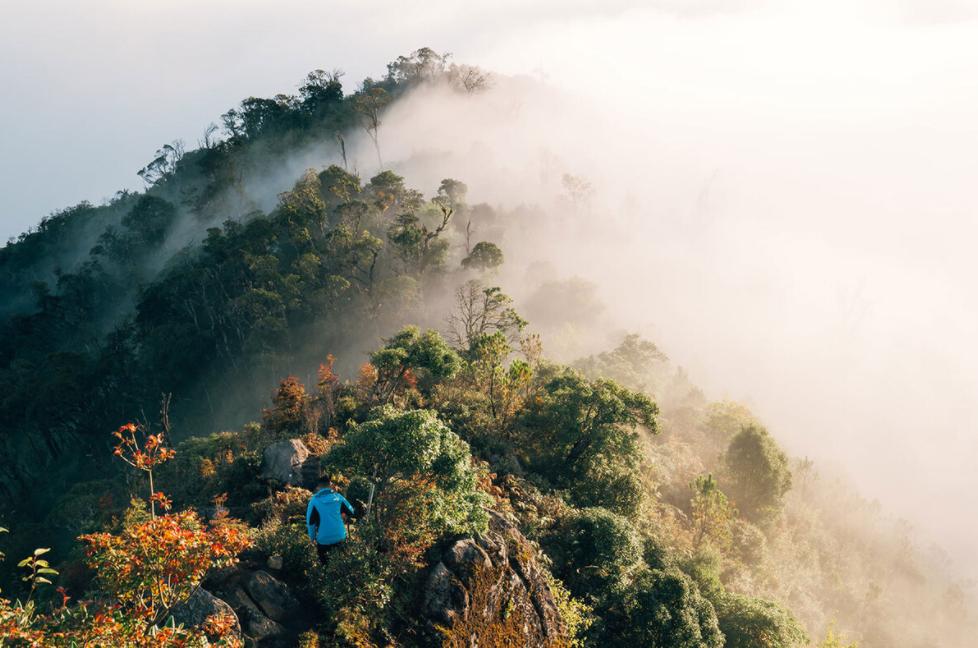 Vietnam's Northwest in the season of golden maple leaves