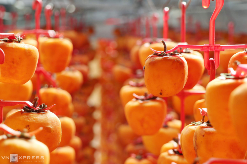 the profession of producing wind hanging persimmons in da lat