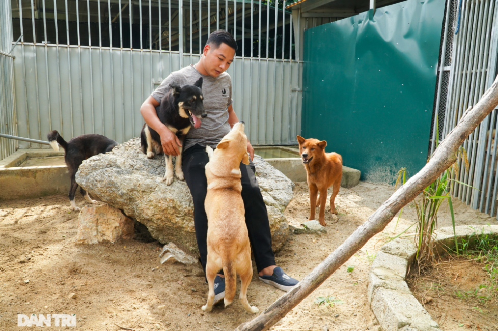 Video: Vietnam's ancient hunting dog breed revived
