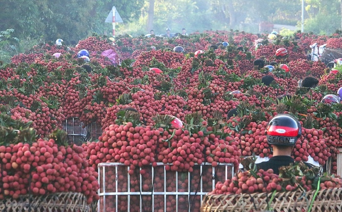 Bac Giang to boost domestic lychee consumption due to export difficulties