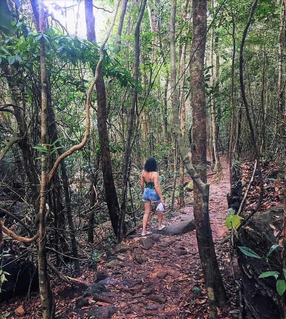 A trekking trail at Phu Quoc National Park.Photo Vietnam Discovery