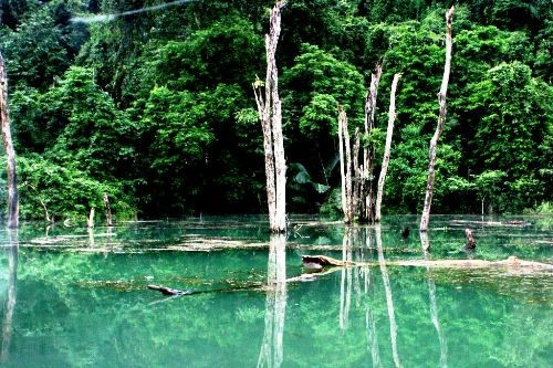 Cuc Phuong National Park in Ninh Binh province is one of ten most stunning national parks in Vietnam. Photo VOV