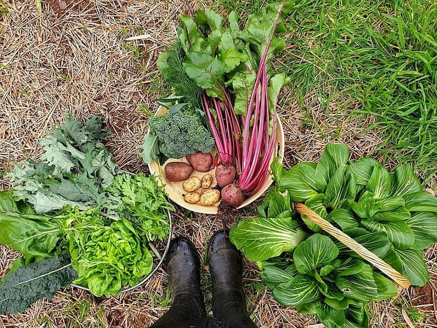 Beets by Tu Anh: Vietnamese Expat Grows Giant Produce in Australia