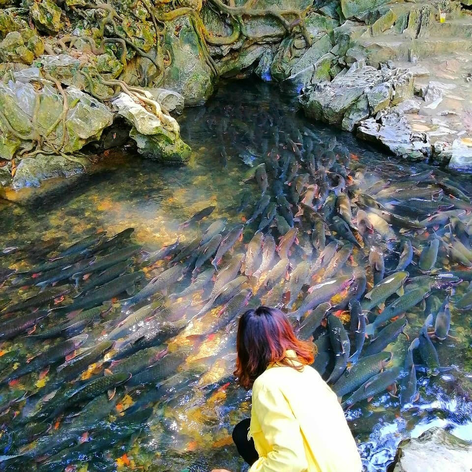 Cam Luong stream: home to 'soldier fish' that nobody dares catch