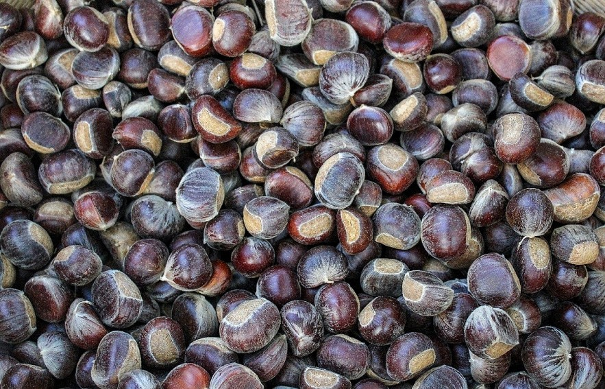 Trung Khanh Chestnut: Cao Bang Province Specialty