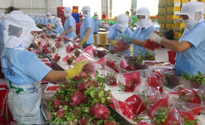 China Resumes Provision of Custom Clearance for Vietnamese Dragon Fruit