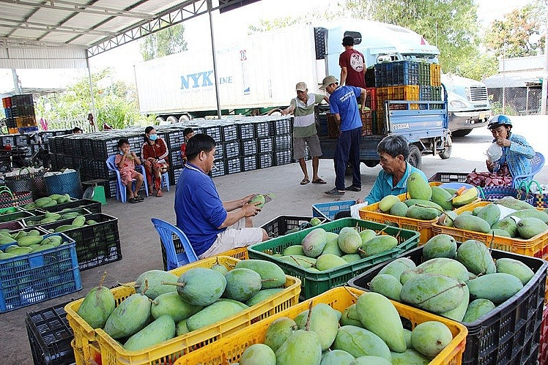 Conference Held to Connect Fruit Cooperatives, Businesses