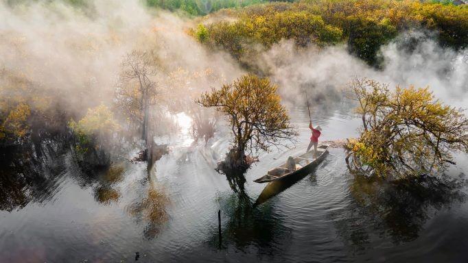 Beautiful Seasonal Changes in Hue's Mangrove Forest