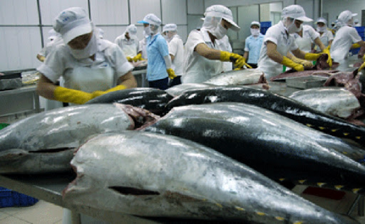 tuna exports face difficulty in recovering after covid pandemic