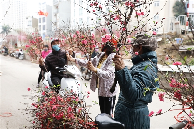 Peach blossom and Tet flower sales drop due to Covid-19 outbreak