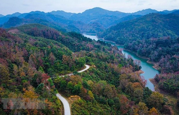 1 billions trees planting project to set in vietnam over five years