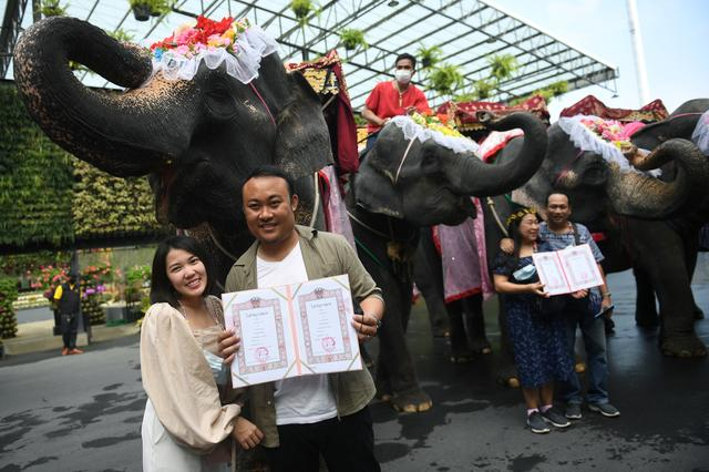 Thailand: Couples got married riding elephants on Valentine