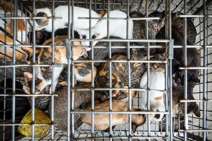 four paws journey to stop dogs and cats meat trade in vietnam