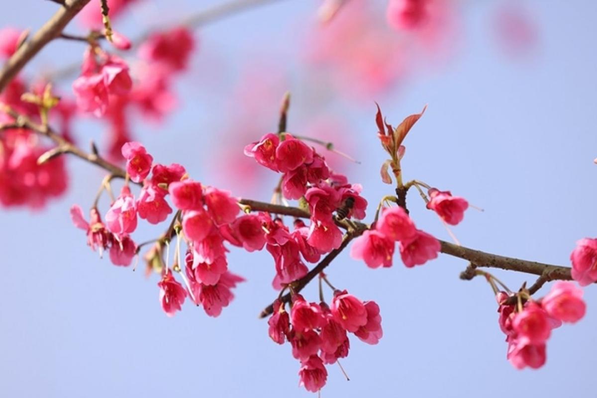 3302-flower-1