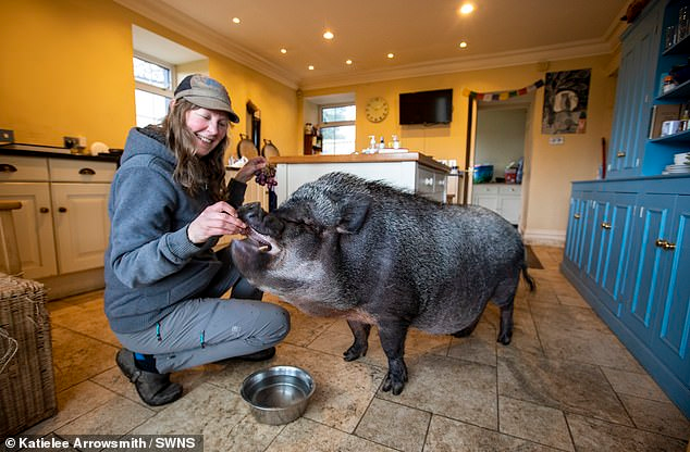 2830-40494818-9363747-he-eats-special-potbellied-pig-pet-food-which-costs-15-for-15kg-a-9-1615819993493