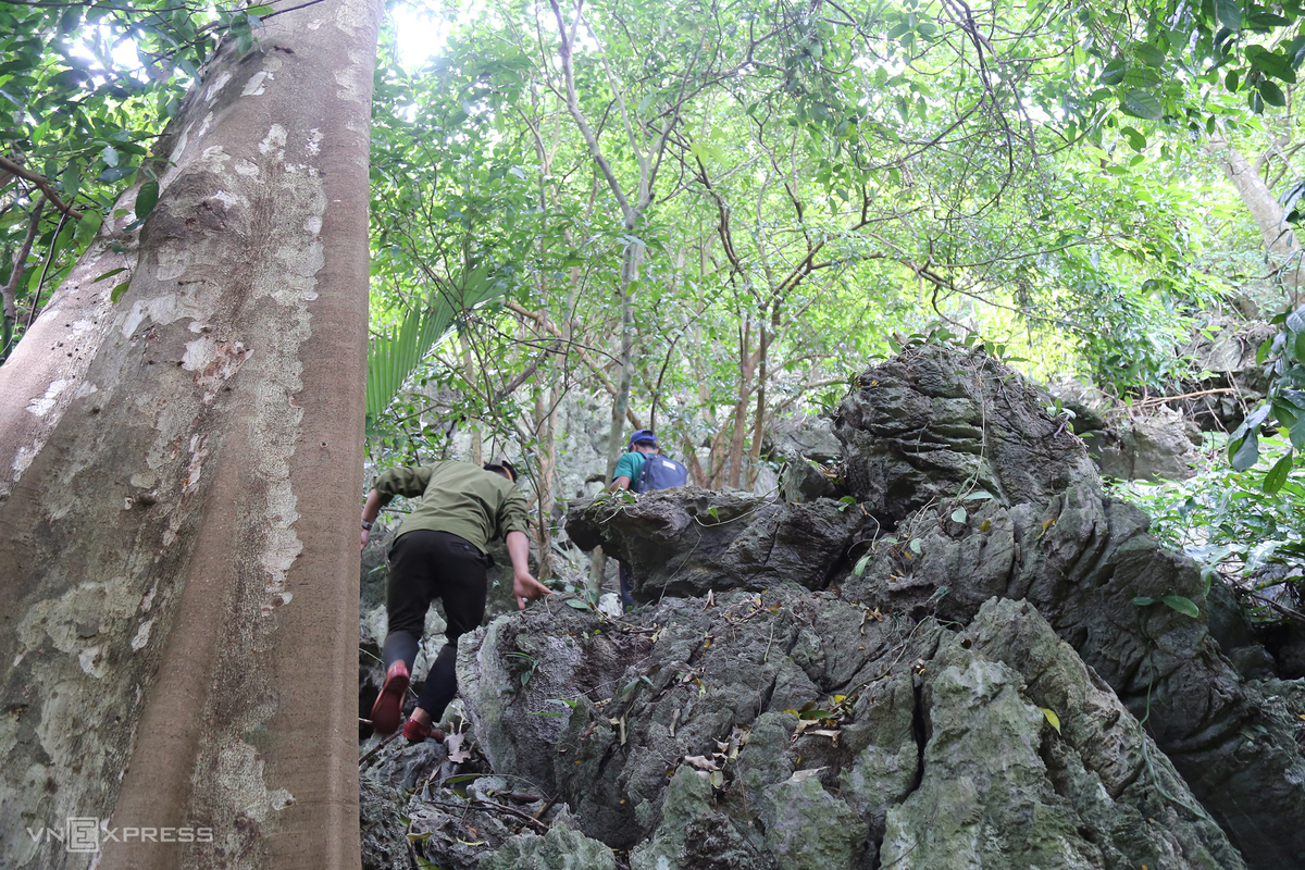 In 2020, at Tria Village, a local resident discovered a new cave in North Huong Hoa Nature Reserve, according to staff member Ho Van Phan.  The cave lies about 30 minutes by foot along Tria Stream from Tria Village. En route is a steep, jagged slope and many old trees. (Photo: VnExpress)
