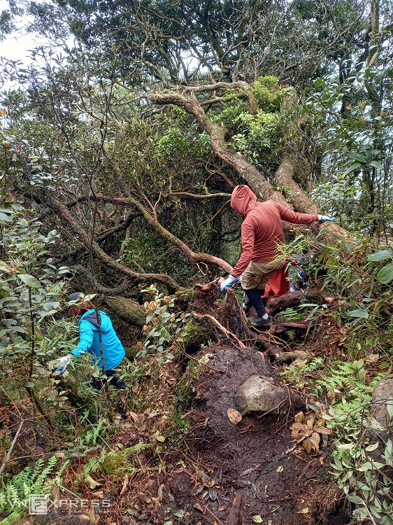 On the second day, the journey involves about three to 3.5 kilometers of walking through a steeper and denser forest. In the rainy season, mosquitoes and leeches are rampant, so visitors need to wear headscarves, long-sleeved clothing, and carry insect repellent. (Photo: VnExpress)
