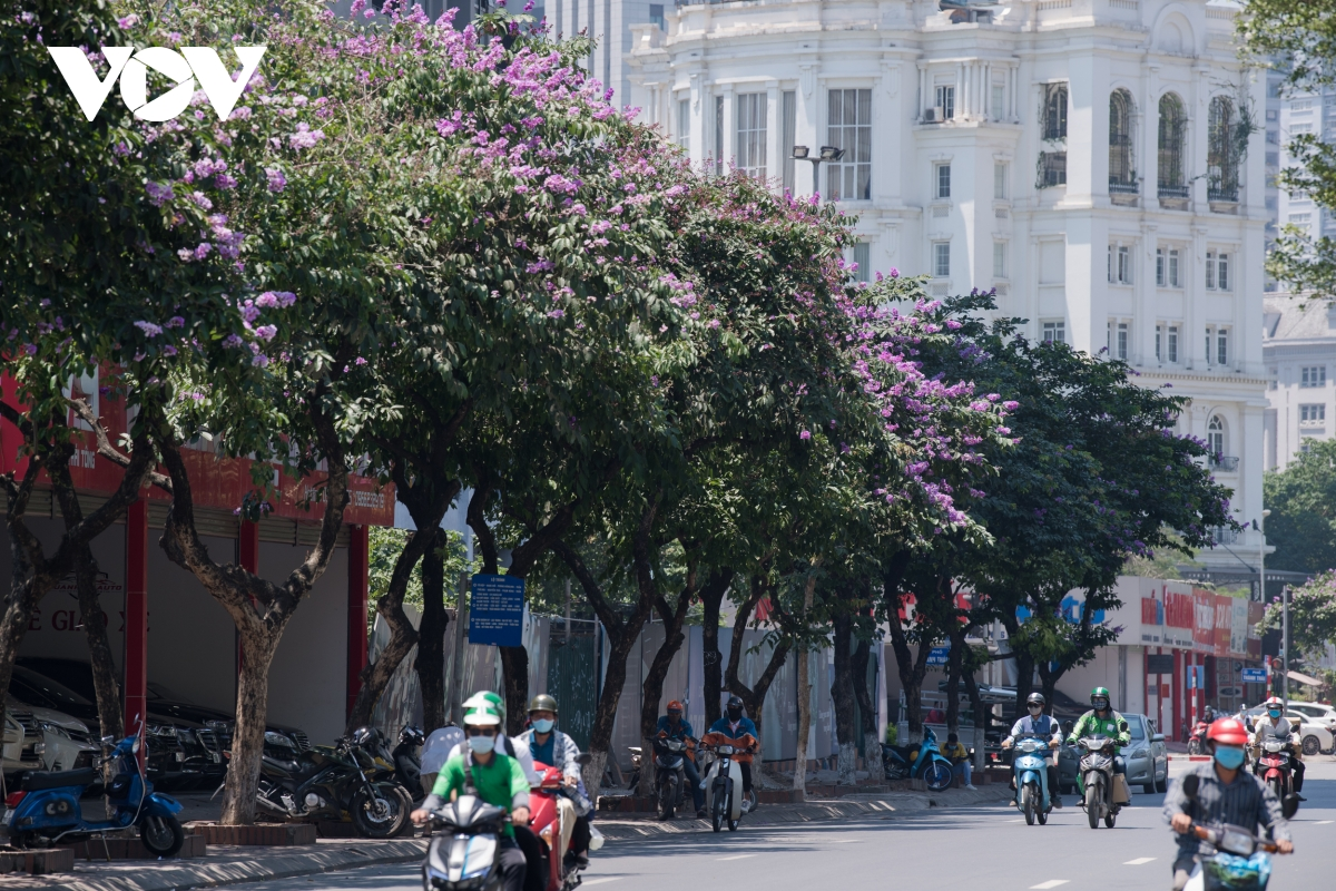 The flowers with colours symbolising faithfulness have become an indispensable part in the life of capital residents. (Photo: VOV)